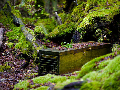 The Kepler Track had these stoat traps almost every 200 metres.  Introduced stoats eat a lot of native bird eggs.